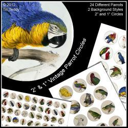 "Parrot Collage Sheets - 2"" and 1"" Digital Images for Cupcake Toppers Jewelry and other Crafts"